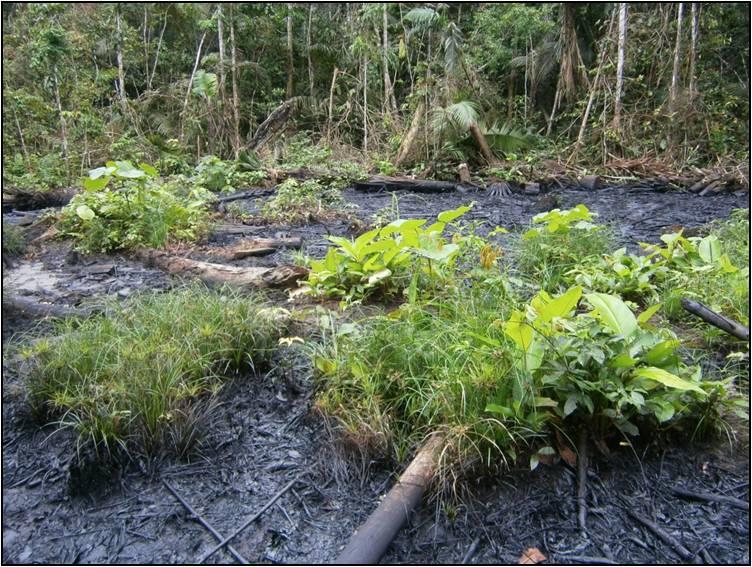 Emgrisa firma un Acuerdo de colaboración con SERECO para proyectos de descontaminación de suelos